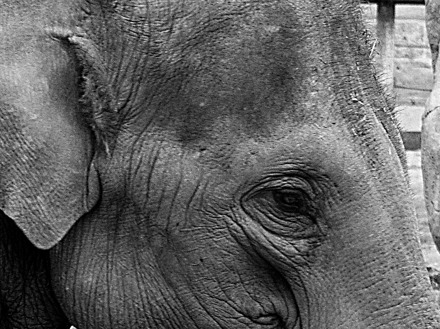 The Elephant And The Dormouse